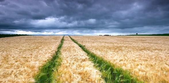 Выбор земельного участка. Типы земель.